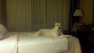 Sadie at the Hotel